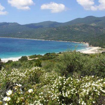 Location de Vacances en Corse du Sud proche de la baie de Cupabbia - Casa Favalella