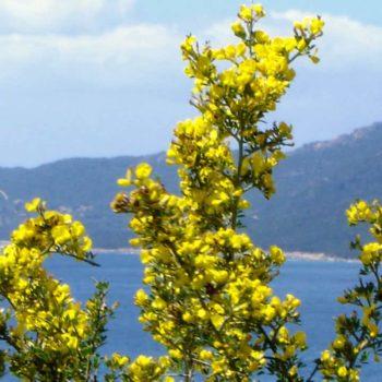 Vacances en Corse du Sud - Casa Favalella
